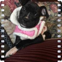 Adopt A Pet :: Sameen - Greensboro, GA