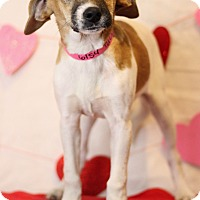 Adopt A Pet :: Tulip - Waldorf, MD