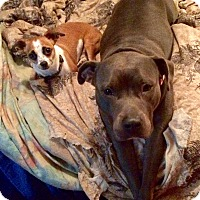 Adopt A Pet :: Allie - Baltimore, MD