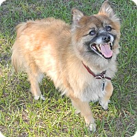 Adopt A Pet :: Cisco - Umatilla, FL