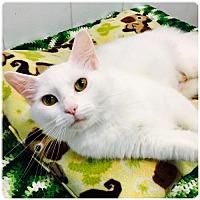 Adopt A Pet :: Naomi (adoption pending) - Sanford, NC