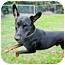 Photo 1 - Doberman Pinscher Mix Dog for adoption in Santee, California - Ranger
