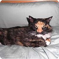 Adopt A Pet :: Rags - Warren, MI