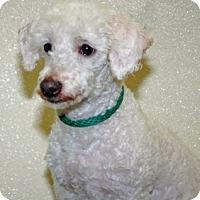 Adopt A Pet :: Thomas - Port Washington, NY