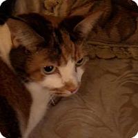Adopt A Pet :: Brooklyn - Delmont, PA