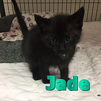 Adopt A Pet :: Jade - Barnwell, SC