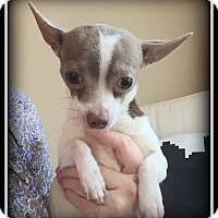 Adopt A Pet :: Nicholas - Indian Trail, NC