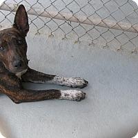 Adopt A Pet :: Lucky - Groton, MA