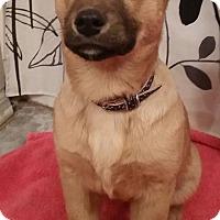 Adopt A Pet :: Hattie - Broken Arrow, OK
