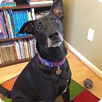 Adopt A Pet :: Luka - Knoxville, TN