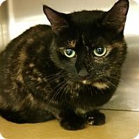 Adopt A Pet :: Emmie - Morganton, NC
