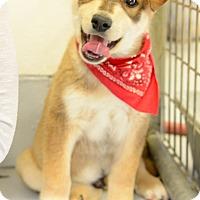 Adopt A Pet :: Cheech - Muldrow, OK
