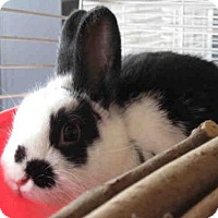Other/Unknown for adoption in Toronto, Ontario - ALFALFA
