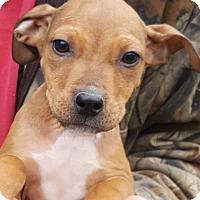 Adopt A Pet :: Finn - Colonial Heights, VA