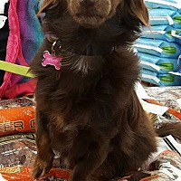 Adopt A Pet :: Hershey Girl - New Oxford, PA