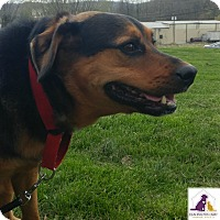 Adopt A Pet :: George - Eighty Four, PA