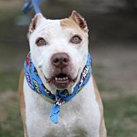 Adopt A Pet :: Grandpa - Fresno, CA