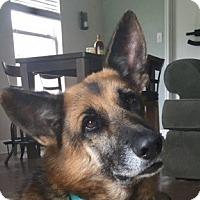Adopt A Pet :: Tango - Dripping Springs, TX