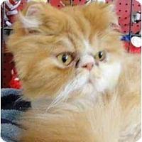 Adopt A Pet :: Mobey - Beverly Hills, CA