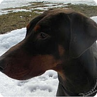 Adopt A Pet :: Keon - Rigaud, QC
