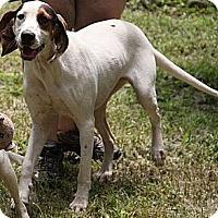 Adopt A Pet :: Heather(200$ Happy Homing-days - Brattleboro, VT