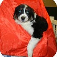 Adopt A Pet :: Geneva ADOPTION PENDING!! - Antioch, IL