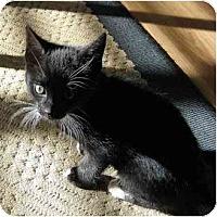 Adopt A Pet :: Chanel - Modesto, CA