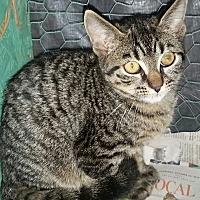 Adopt A Pet :: Sunny *6 mo - Ocala, FL