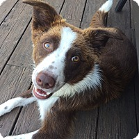 Adopt A Pet :: Mocha-Appliactions closed - Midwest (WI, IL, MN), WI