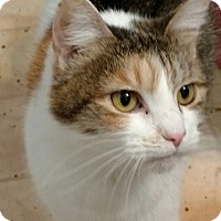 Adopt A Pet :: Chloe - Shelbyville, KY