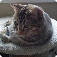 Adopt A Pet :: Sheba - Owatonna, MN
