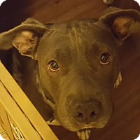 Adopt A Pet :: Lucy - Molalla, OR