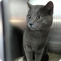 Adopt A Pet :: Stone - Alamogordo, NM