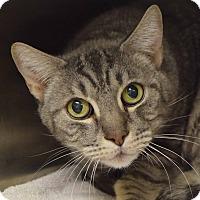 Adopt A Pet :: George - Sierra Vista, AZ