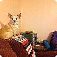 Adopt A Pet :: Mia-Tia - Indianapolis, IN