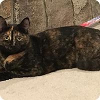 Adopt A Pet :: Chantilly - Naugatuck, CT