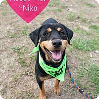 Adopt A Pet :: Nika - Kingwood, TX