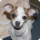 Adopt A Pet :: 24495 - Yasmine