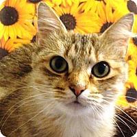 Adopt A Pet :: Mama - Albany, NY
