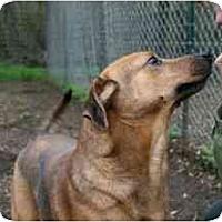 Adopt A Pet :: Daron FOSTER NEEDED! - Seattle, WA