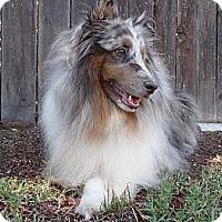 Adopt A Pet :: Princeton - San Diego, CA