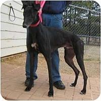 Adopt A Pet :: Won - Oak Ridge, NC
