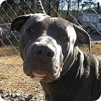 Adopt A Pet :: Kyser - Athens, GA