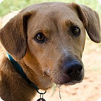 Adopt A Pet :: Sophie - Homewood, AL