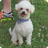 Adopt A Pet :: Cooper - Kingwood, TX