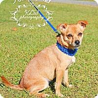Adopt A Pet :: Sassy - Fort Valley, GA