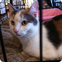 Adopt A Pet :: Opal - Horsham, PA