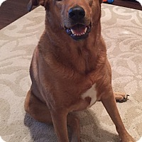 Adopt A Pet :: Cali -Courtesy Listing - Richmond, VA
