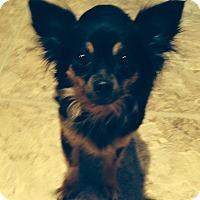Adopt A Pet :: Lily - Bridgewater, NJ