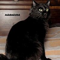 Adopt A Pet :: Midnight - Baton Rouge, LA